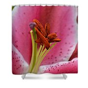 Pink Asiatic Abstract Shower Curtain