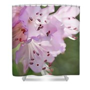 Pink Azalea Flowers In The Morning Light Shower Curtain