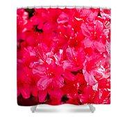 Pink Azalea's Shower Curtain