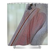 Pink Backed Pelican Shower Curtain