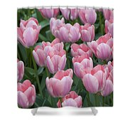 Pink Beauties Shower Curtain
