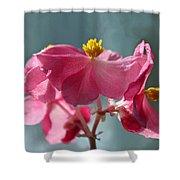 Pink Begonia Flower Portrait Shower Curtain