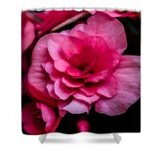 Pink Begonia Shower Curtain