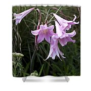Pink Belladonna Lily - Naked Lady - Belladonna Amaryllis  Shower Curtain