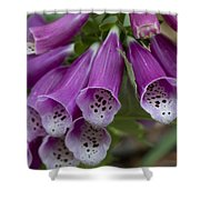Pink Bells Shower Curtain
