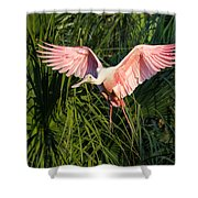 Pink Bird Flying - Spoonbill Coming In For A Landing Shower Curtain