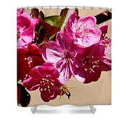 Bee Flying Pink Blossoms 031015a Shower Curtain