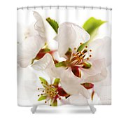 Pink Blossom Shower Curtain by Elena Elisseeva