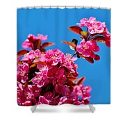 Pink Blossoms Blue Sky 031015a Shower Curtain