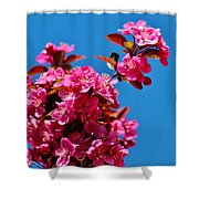 Pink Blossoms Blue Sky 031015aa Shower Curtain