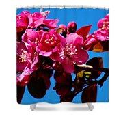 Pink Blossoms Closeup 031015a Shower Curtain