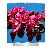 Pink Blossoms Closeup 031015ab Shower Curtain