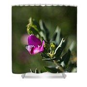 Pink Blush - Sweet Pea Bush  Shower Curtain