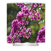 Pink Bougainvillea Sunshine Shower Curtain