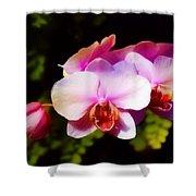 Pink Brilliance Shower Curtain