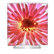 Pink Burst Shower Curtain