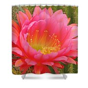 Pink Cactus Flower Of The Southwest Shower Curtain
