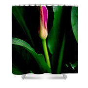 Pink Calla Lily Blossom Shower Curtain