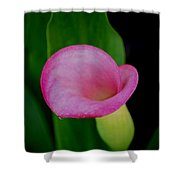 Pink Calla Lily Shower Curtain