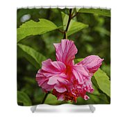 Pink Camellia  Shower Curtain
