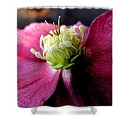 Pink Camellia Flower Shower Curtain