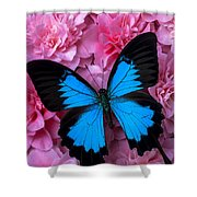 Pink Camilla And Blue Butterfly Shower Curtain