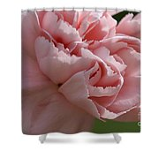Pink Carnation Shower Curtain