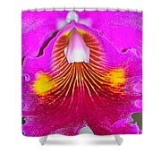 Pink Cattelaya Orchid Shower Curtain