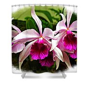Pink Cattleya Cluster Shower Curtain