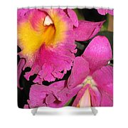 Pink Cattleya Orchid Shower Curtain