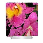 Pink Cattleya Orchid Shower Curtain
