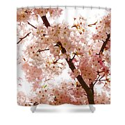 Pink Cherry Blossoms - Impressions Of Spring Shower Curtain
