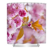 Pink Cherry Blossoms In Spring Orchard Shower Curtain by Elena Elisseeva