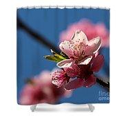 Pink Cherry Tree Blossom Shower Curtain