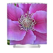Pink Clematis Beauty Shower Curtain