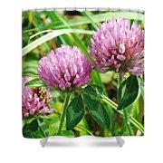 Pink Clover Wildflower - Trifolium Pratense Shower Curtain