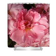 Pink Cluster Shower Curtain