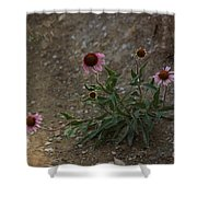 Pink Cone Flower's Close Up In A Road Shower Curtain
