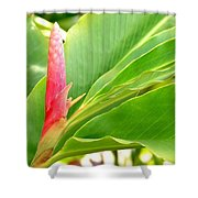 Pink Cone Ginger Bud Shower Curtain