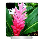 Pink Cone Ginger Shower Curtain