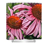 Pink Coneflowers Shower Curtain