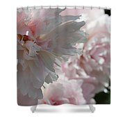 Pink Confection Shower Curtain