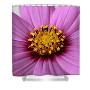 Pink Coreopsis Shower Curtain