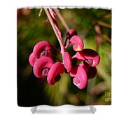 Pink Curls - Flower Macro Shower Curtain