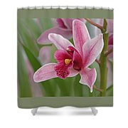 Pink Cymbidium Orchid Shower Curtain