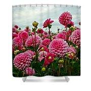 Pink Dahlia Field Shower Curtain