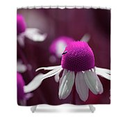 Pink Daisies 1 Shower Curtain