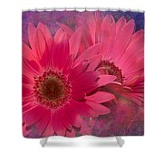 Pink Daisies Abstract Shower Curtain
