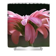 Pink Daisy 1 Shower Curtain