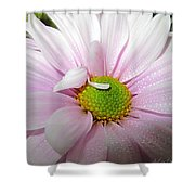 Pink Daisy Freshness With Water Droplets Shower Curtain